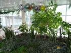 Зимний сад санатория