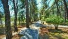 территория лесопарка
