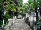 лестница на территории