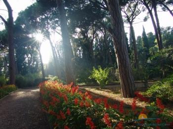 аллеи в парке.jpg
