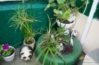 растения во дворе