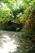 растения на территории