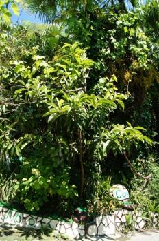 Пальмы и растения.JPG