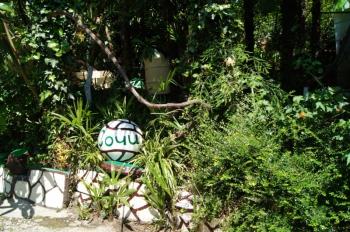 растения во дворе.JPG