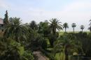 Пальмы в парке отеля