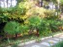 Прогулочная тропинка в парке