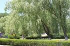 парковая территория.